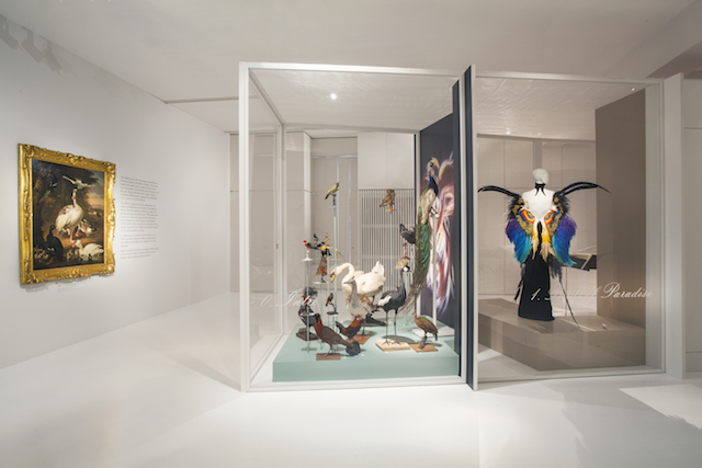 The intro of the expo Birds of Paradise at MoMu Fashion Museum Antwerp with a painting by Melchior d'Hondecoeter and a tableau of 23 stuffed birds, Photo: Boy Kortekaas
