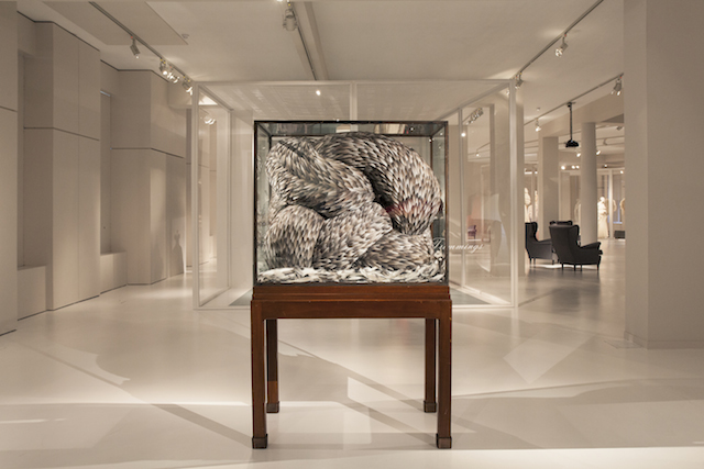 Kate MccGwire, Vex, 2008, Mixed media with pigeon feathers in antique cabinet at the Birds of Paradise: Plumes & Feathers exhibition, MoMu Fashion Museum Antwerp, Photo: Boy Kortekaas